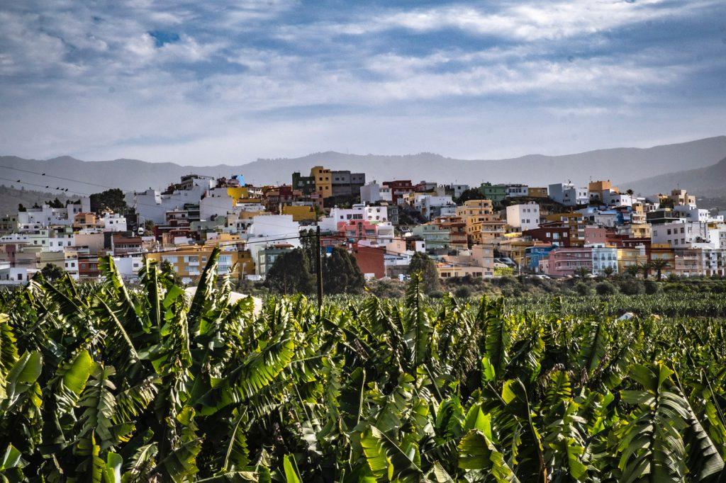 Bananenplantage in Spanje