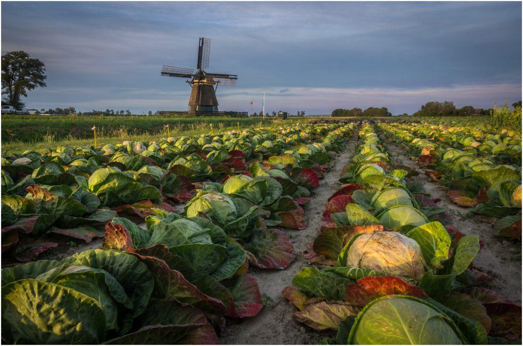 Foto-insp;iratie akkerbouw in Nederland