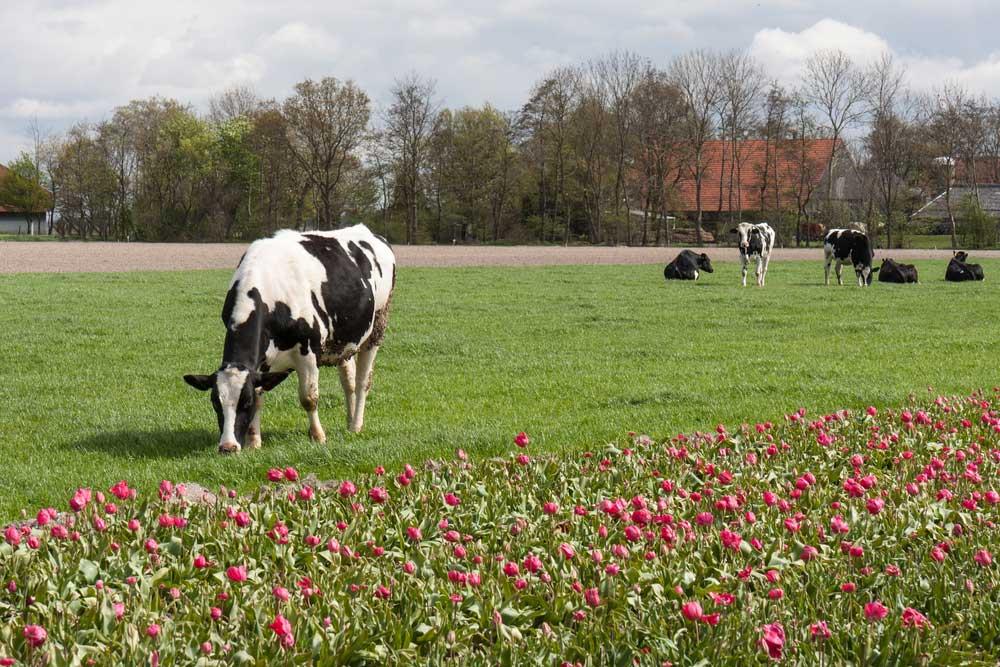 Uitjes naar de boer, de leukste boerderijuitjes!